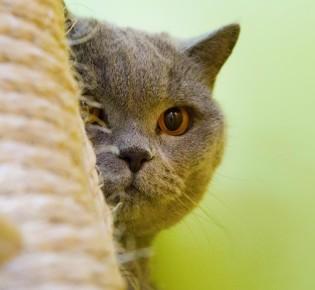 Куда пристроить кошку на время отпуска без кошачьих слёз и истерик