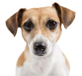 Заболевания почек у собак: виды, причины, симптомы, диагностика и лечение, профилактика