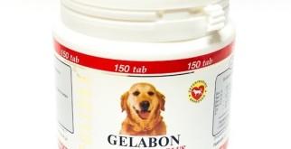 Полидекс Гелабон плюс для собак: инструкция, цена, отзывы