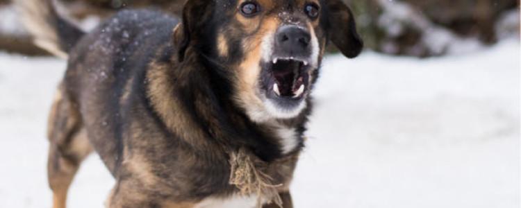Бешенство у собак: симптомы и признаки, прогноз