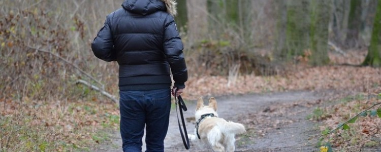 Правила выгула собак: закон в 2020 году, штраф, запрещенные места, можно ли гулять без намордника и поводка в городе