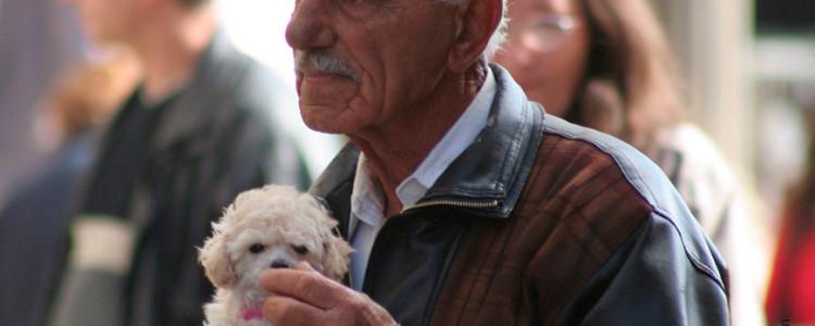 Гипоаллергенные породы собак — Топ-30 собак для аллергиков и астматиков