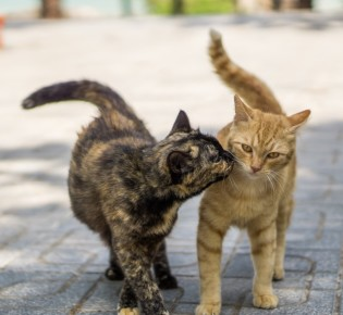 Кастрация кота: когда и зачем проводить операцию, плюсы и минусы, как проходит кастрация кота, послеоперационный уход и питание
