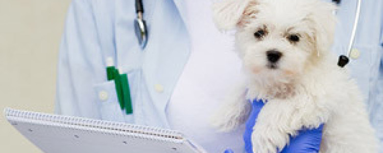 Вакцинация собак – правила, особенности, схема