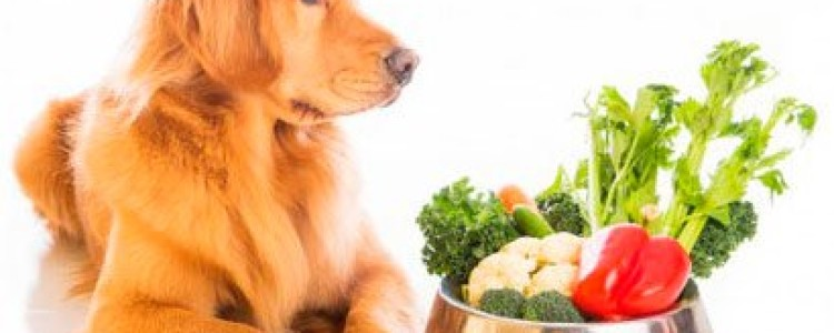 Лучшие витамины для собак, ТОП-15 рейтинг хороших 2020