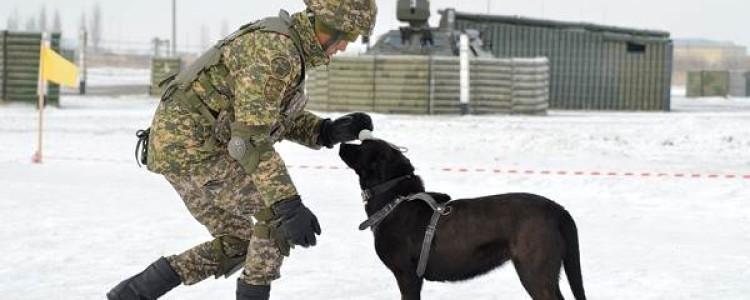 Дрессировка служебных собак: основные правила