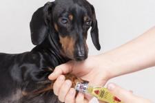Электрическая когтеточка для собак, или гриндер: внешний вид, назначение, как выбрать и использовать