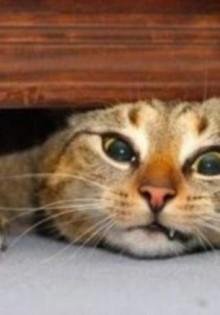 Catsan — наполнители и поглотители влаги для кошек