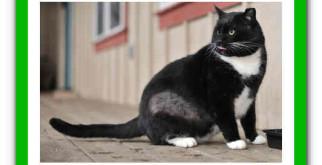Алопеция у кошек: таблица симптомов и способов лечения