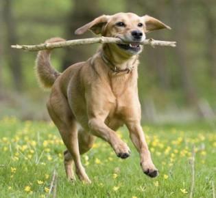 Как научить собаку команде Апорт: что значит команда Апорт, процесс обучения, дрессировки